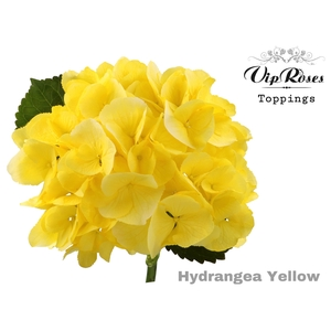HYDR M SUNNY YELLOW 60 cm
