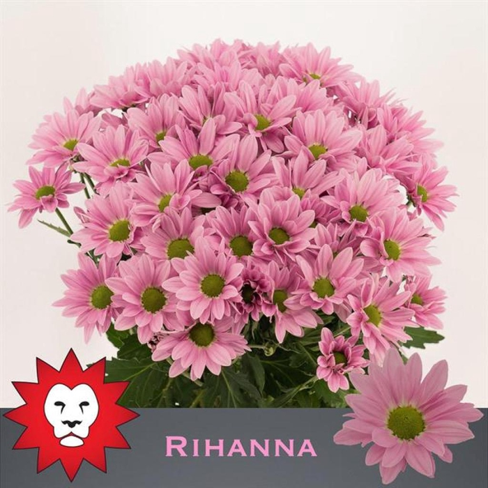 <h4>CHR T RIHANNA</h4>