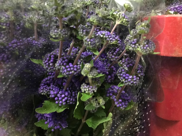 <h4>Caryopteris Blue (p/bunch)</h4>
