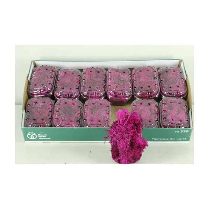 <h4>Moss Icelandic Fuchsia Box</h4>