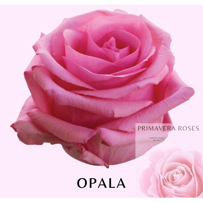<h4>R GR OPALA</h4>