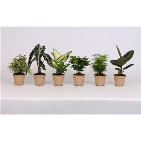 <h4>Ov Kamerplanten Gemengd Pulppot</h4>