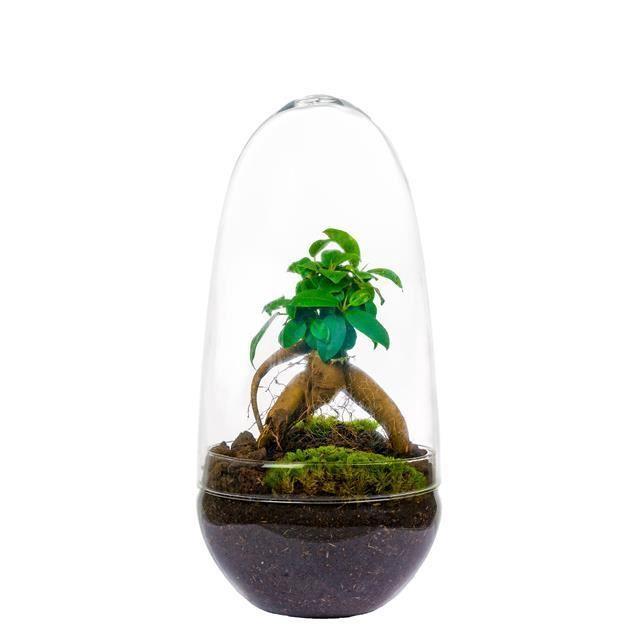 <h4>Arrangementen kamerplanten groen</h4>