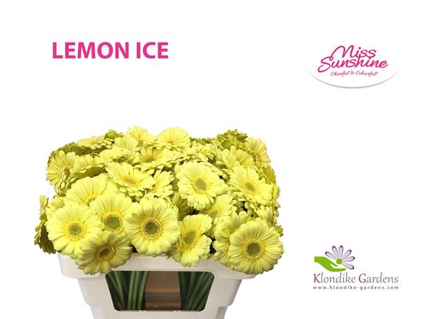 <h4>GE MI LEMON ICE</h4>