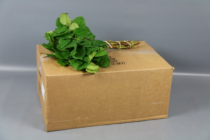<h4>SALAL TIPS BROWN BOX</h4>