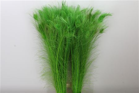 <h4>Dec Feather Peacock Green</h4>