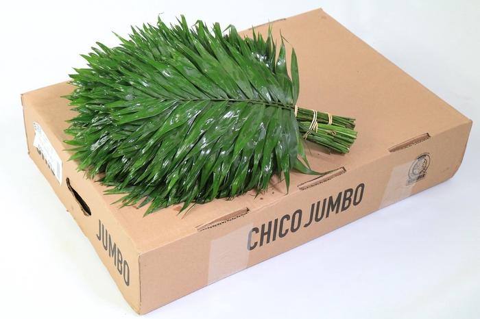 <h4>Chico Jumbo Box</h4>