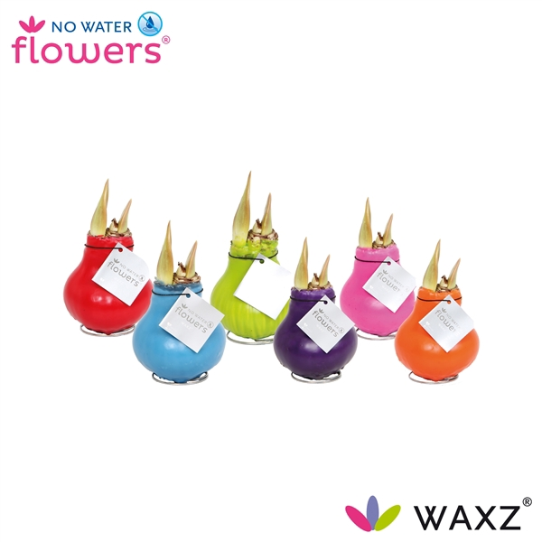<h4>No Water Flowers Waxz® Happy Mix</h4>