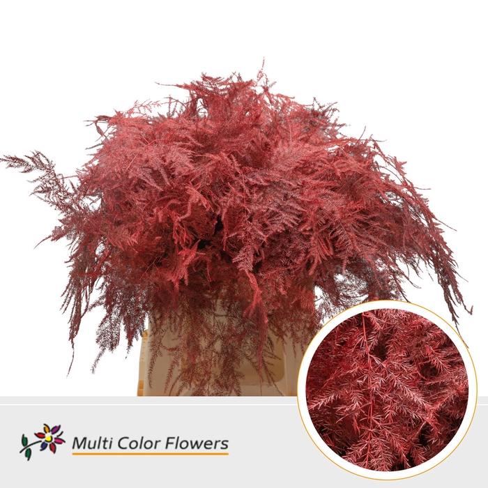 <h4>Asparagus 1e veren gekleurd Rood</h4>