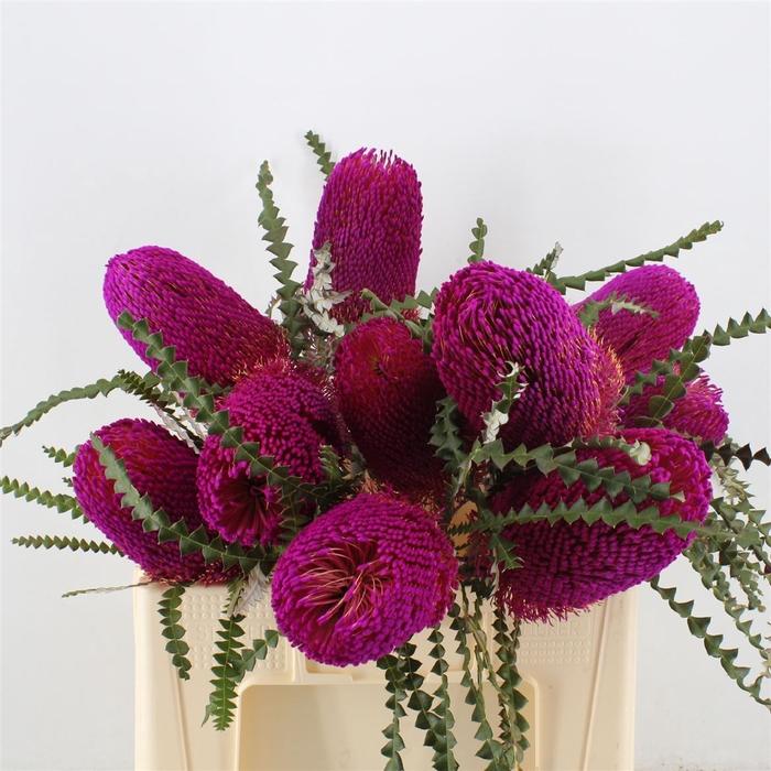 Banksia Speciosa Pink