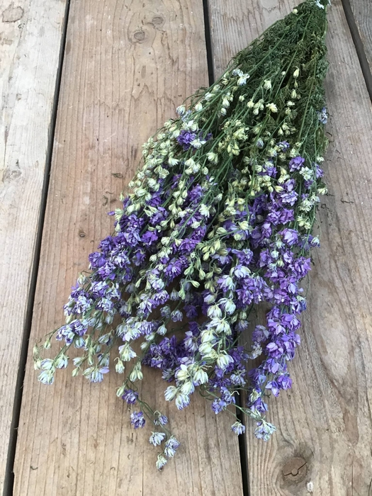 <h4>DRIED DELPHINIUM MILKA EXTRA BUNCH</h4>