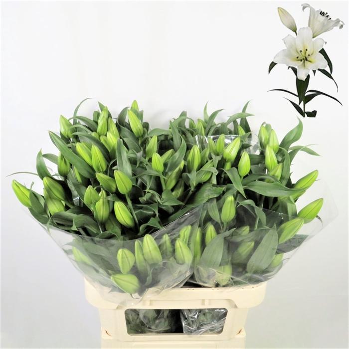 <h4>Lilium Oriental Forever</h4>