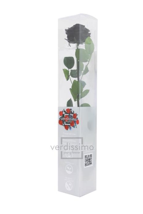 Roos op steel  xl Plexi 55cm Black