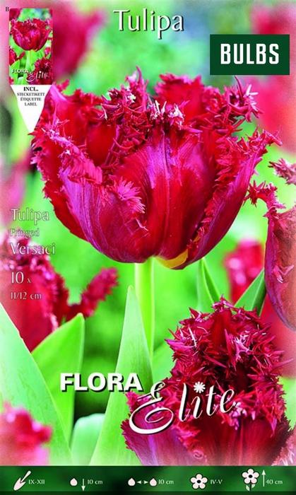 <h4>Z Tulipa Fringed Versac</h4>