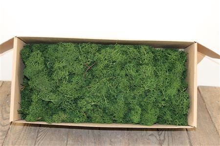 <h4>Reindeer Moss 500gr Moss Green</h4>