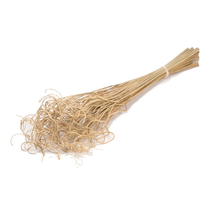 <h4>DRIED FLOWERS - CURLY TING TING 100PCS NATURAL</h4>