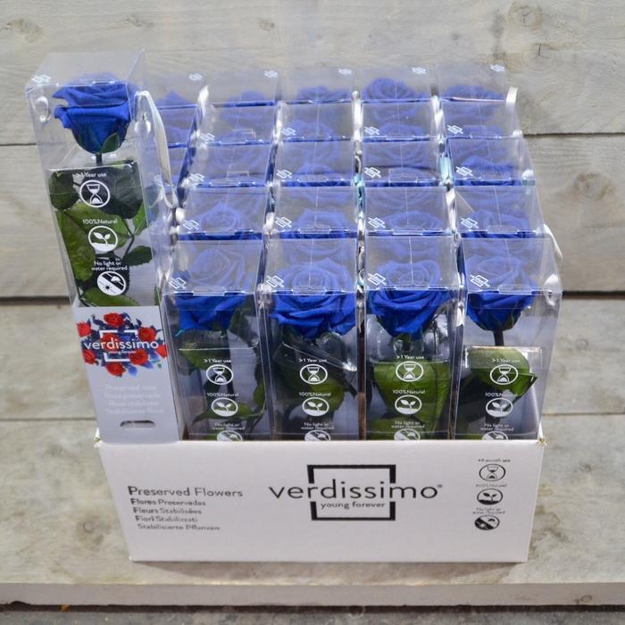 <h4>R PR Amorosa Mini Dark Blue</h4>