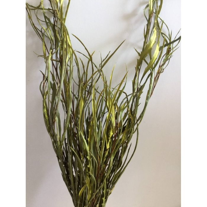 <h4>DRIED FLOWERS - GREVILLEA GEVERFD YELLOW PER BOS</h4>