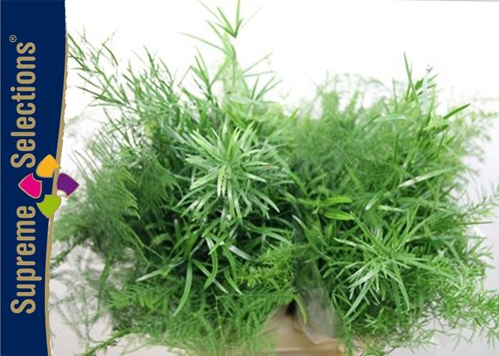 <h4>Asparagus Mix per stem</h4>