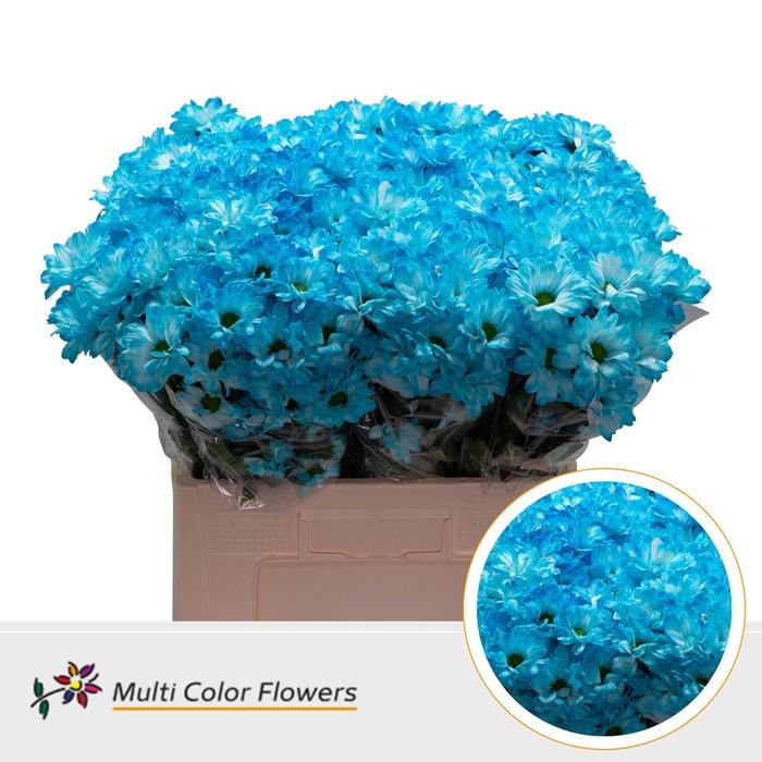 <h4>Chrys.tros Bacardi wit gekleurd Blauw licht</h4>