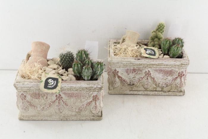 <h4>Arr. Js Ker. Old Look - Cactus</h4>