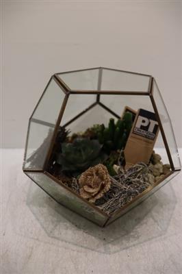 <h4>1957  Hoekenglas Succulents</h4>