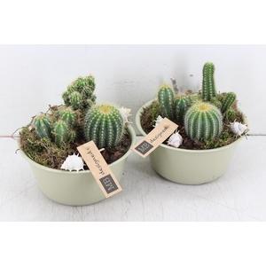 arr. MB - Zink potje green cactus