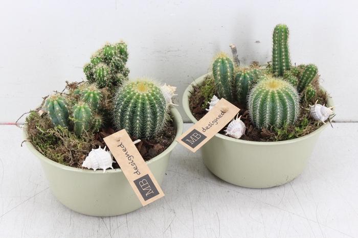 <h4>arr. MB - Zink potje green cactus</h4>