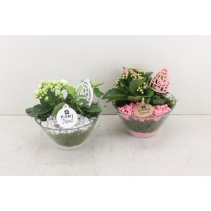 arr. PL - Glas schaaltje - roze/wit