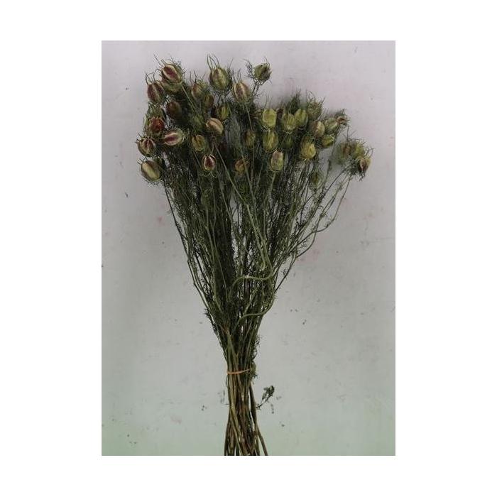 <h4>DRIED FLOWERS - NIGELLA</h4>