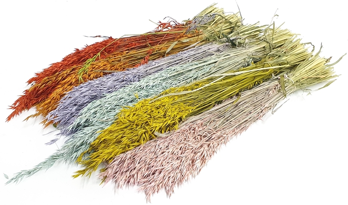 <h4>Avena per bunch Mixed Colours</h4>