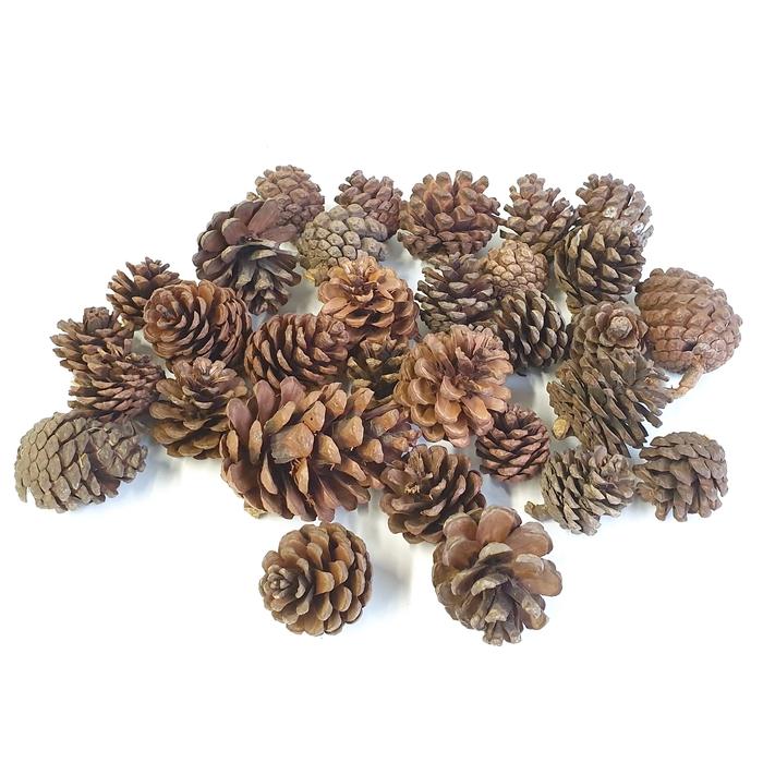 <h4>Blue pine 500gr poly Naturel</h4>