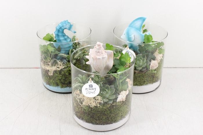 <h4>arr. PL - Glas cilinder zeedieren mix</h4>