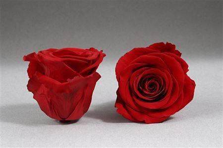 <h4>Pr 4 Red-01 Warmi</h4>
