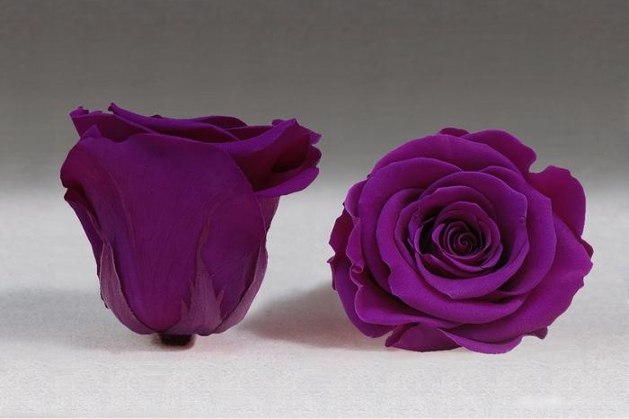 <h4>Rose stab. XXL Pur-02</h4>