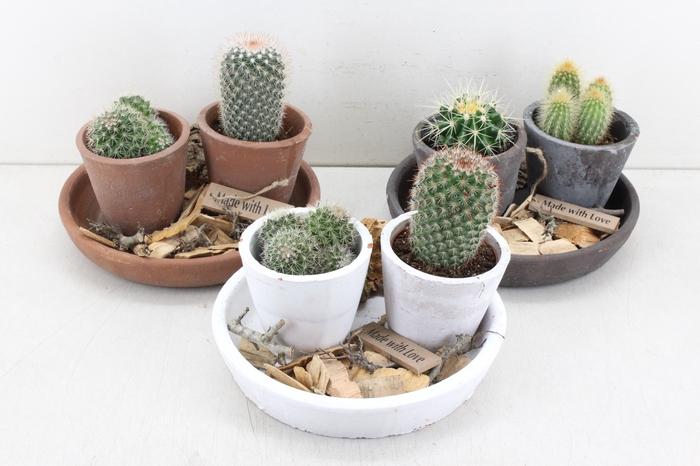 <h4>arr.. Cactus MB - Ker. plateau 2pot</h4>