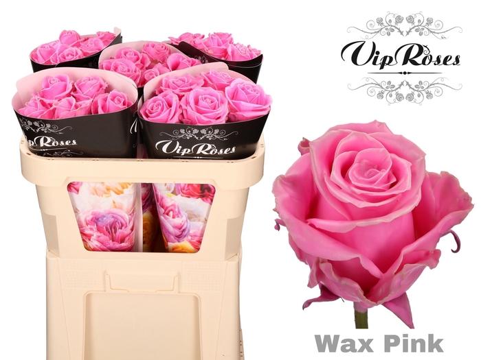 <h4>R GR WAX PINK x 25</h4>