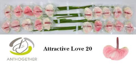 <h4>ANTH ATTRACTIVE LOVE 20.</h4>