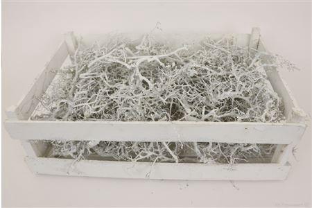 <h4>BONSAI WOOD BASIC NATURAL WHITE W.SILVER 100055532</h4>