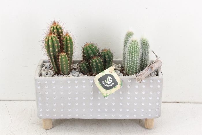 <h4>arr. JS Cactus - Ker. rechth. stip</h4>