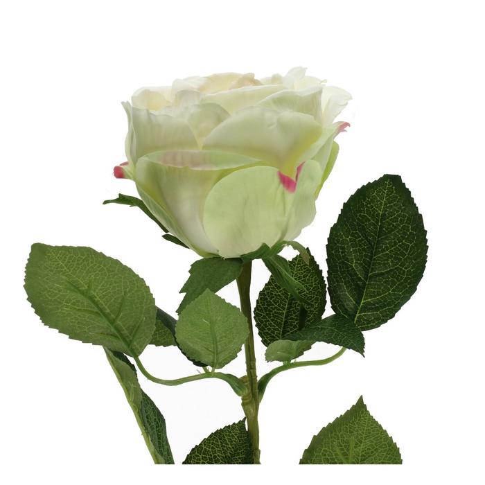 <h4>Silk Roos 70cm</h4>