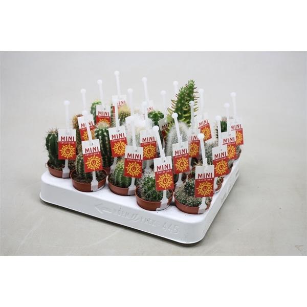 <h4>Cactus gemengd Met cactus picker en etiket</h4>