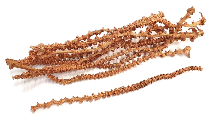 <h4>Banana stem 10pc in poly Copper</h4>