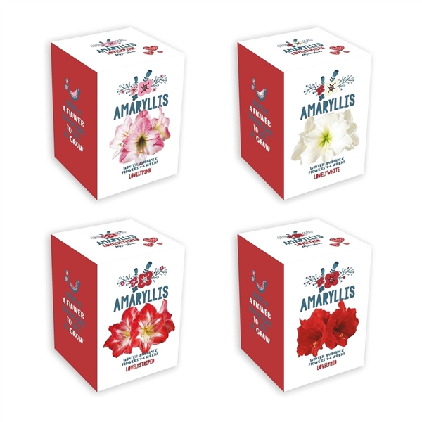 <h4>Amaryllis Jul Kit Mixed</h4>