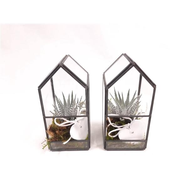 <h4>GHK8HRT Glass House Mini Terrarium  Heart</h4>