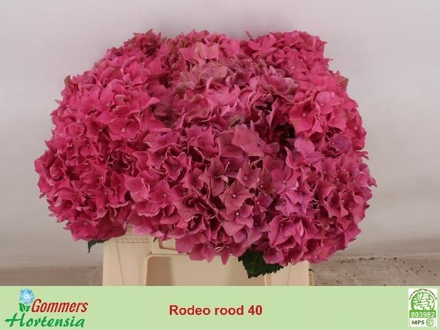 <h4>HYDR M RODEO RD</h4>
