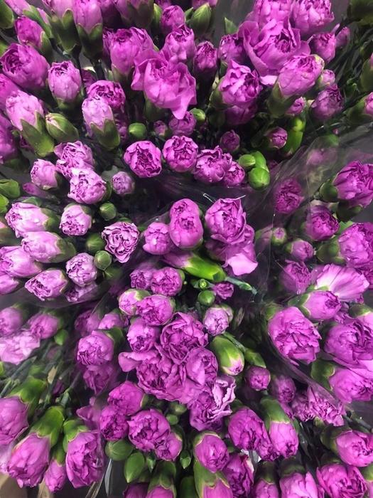 <h4>Di tr Lilac Melissa</h4>