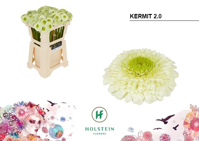<h4>GE BV water Gerponi Kermit 2.0</h4>