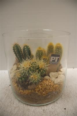 <h4>9918 Cil. Breed Cactus XL</h4>