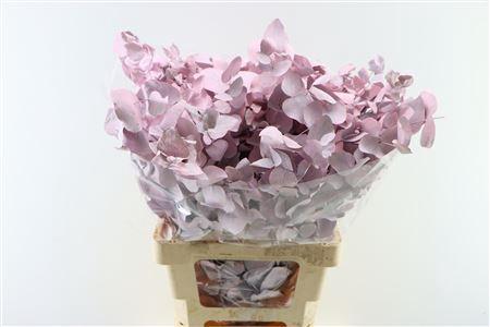 <h4>Dec Cynerea Pink</h4>